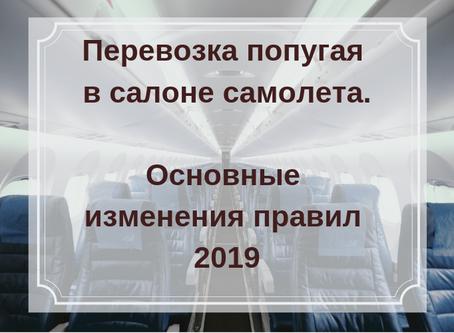 ПЕРЕВОЗКА ПОПУГАЯ В САЛОНЕ САМОЛЕТА.ОСНОВНЫЕ ИЗМЕНЕНИЯ ПРАВИЛ В 2019 ГОДУ.