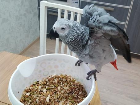Сложная каша для попугая.                   Варить или не варить?