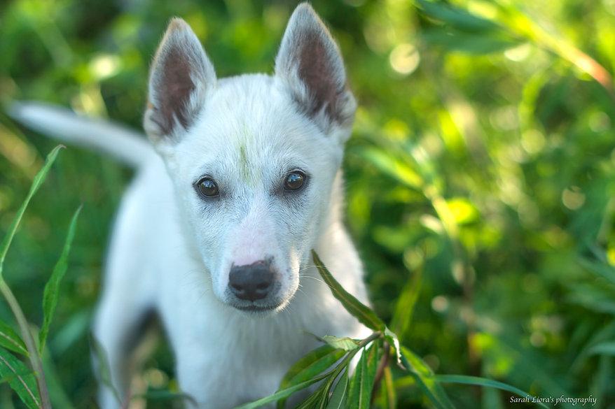SarahLiora_Summer_Puppies-0029.jpg