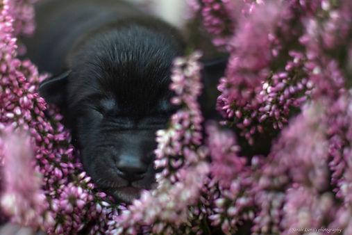 SarahLiora_Puppies-0072.jpg
