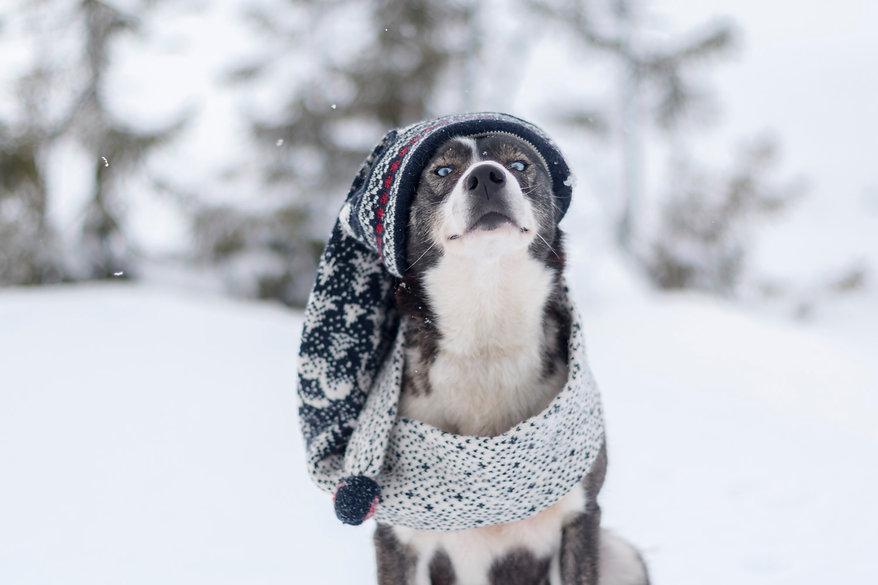 SarahLiora_Cito_Winterwonderland4-0435.j