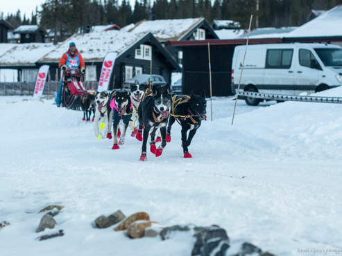 Mush Synnfjell -  had visitors from international mushers. Lance Mackey was one of them.