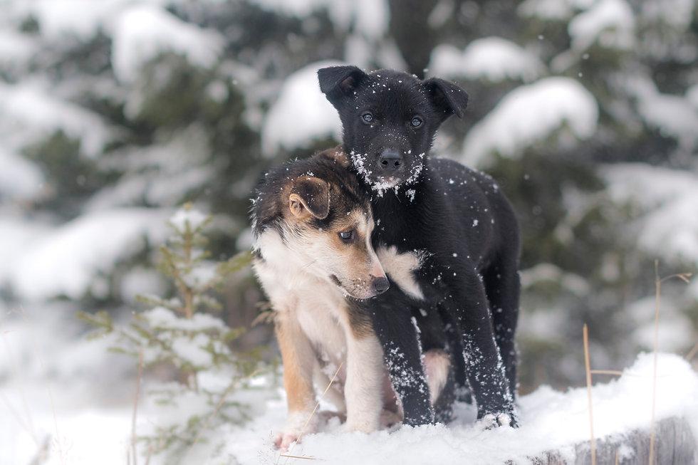 SarahLiora_Puppies-0771.jpg