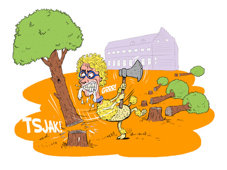 Sint-Truiden, stad waar eeuwenoude bomen ten dode zijn opgeschreven