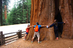 Very close to the Giant Sequoias