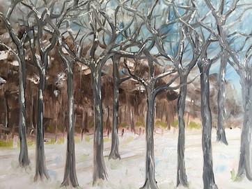 Winter Trees -  Tony Langham