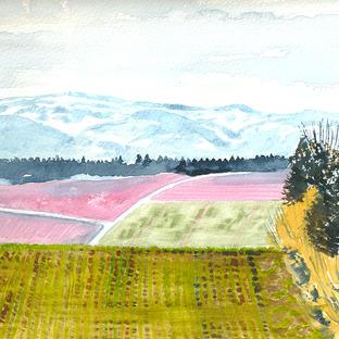 Winter crop, Cheviot Hills