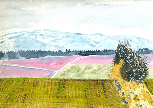 Winter crop, Cheviot Hills -  Gunda Cannon