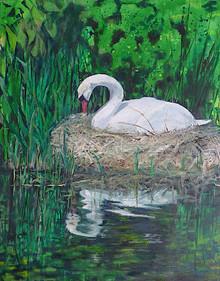 Brooding Swan