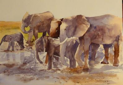Elephants -  Angela Musil