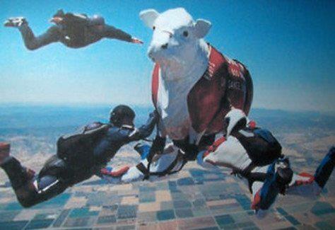 ruof skydive