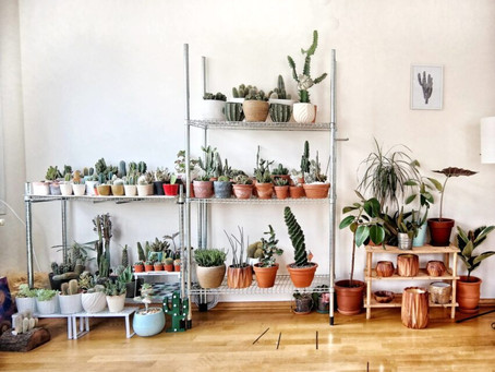 5 Easy House Plants to Liven Up Your Space