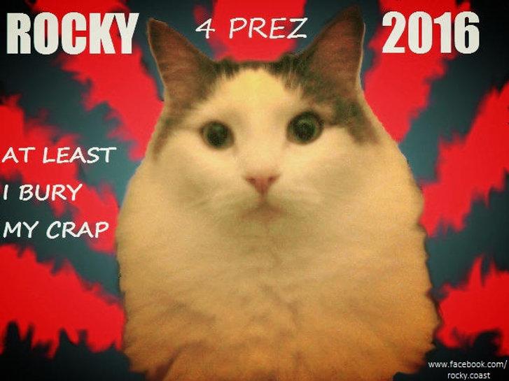 Rocky, rocky coast 4 president, maine coon