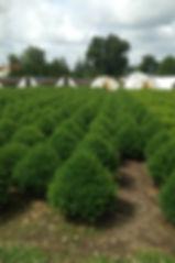Garden Nursery Tree Sales