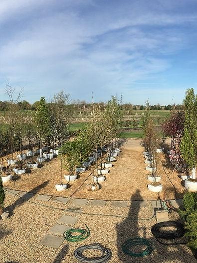 Garden Nursery in Hampshire Tree Sales