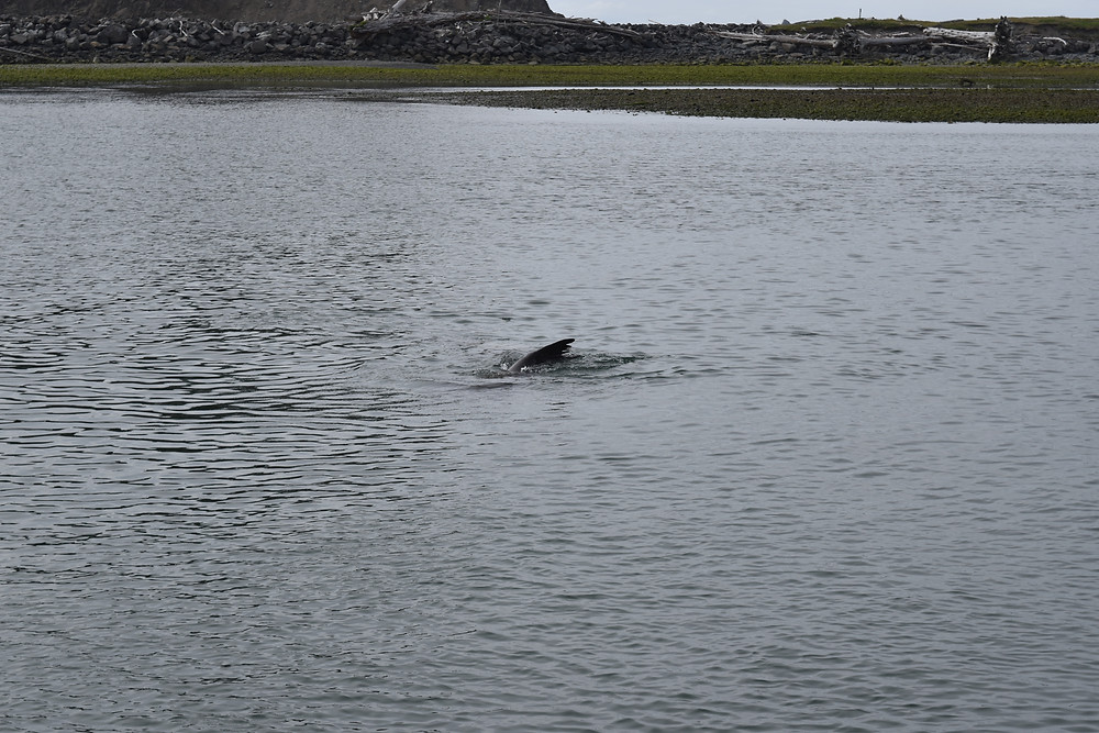 Marine Mammals - Olympic National Park