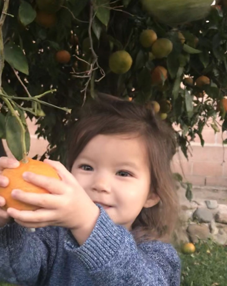 Laguna Food Pantry seeks fruit donations from locals yards
