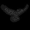 LBP_Logo_Trans3-01.png