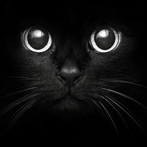 La mission secrète des chats, à nos côtés.
