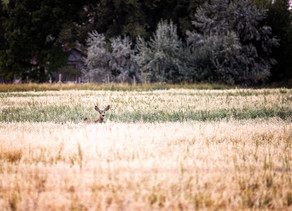 CWD Positives From Across The State, No New Areas