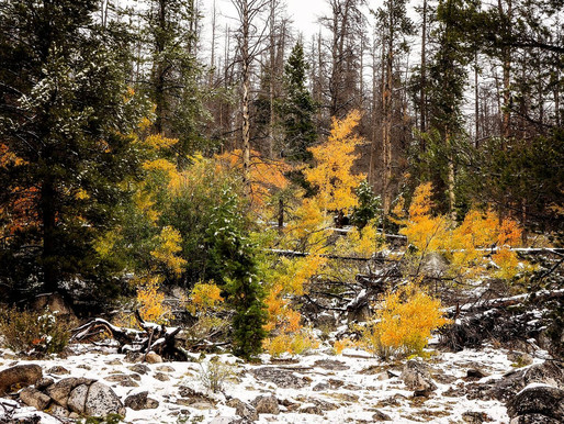 UMW Releases Statement On Birch Creek Center