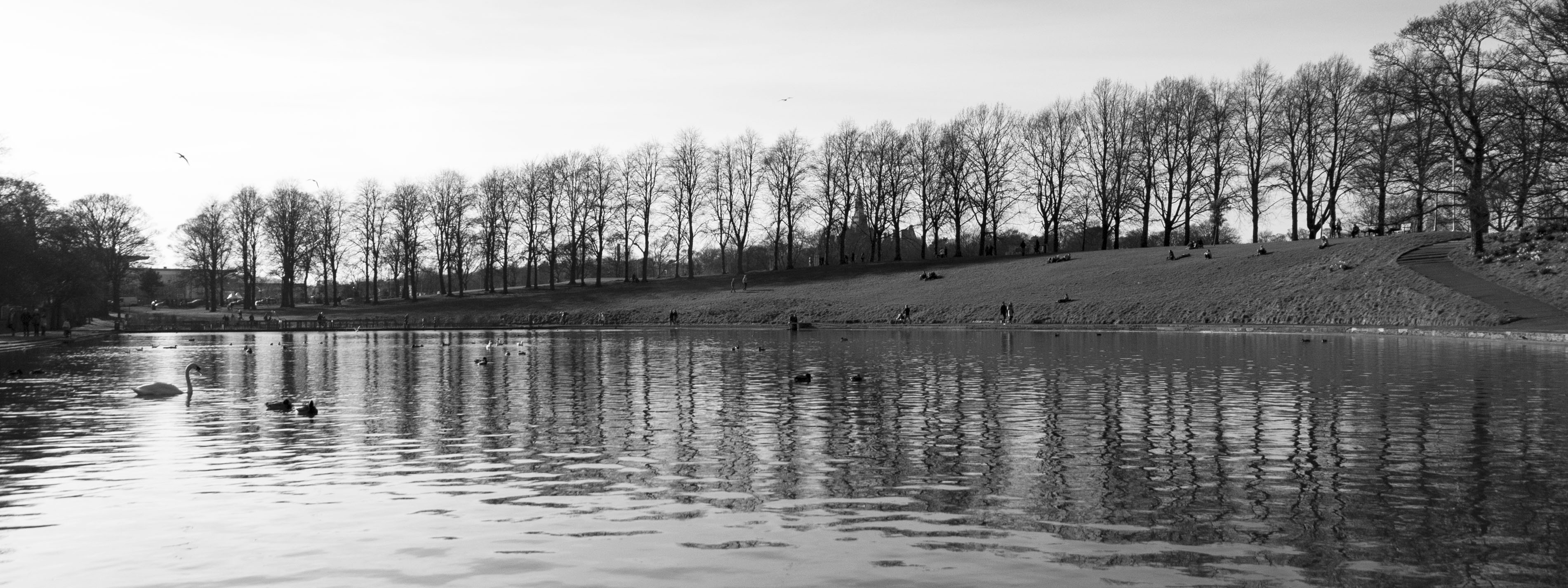 Inverleith Park, Edinburgh - 3006