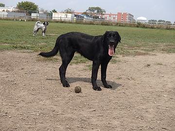 etobicoke dog walking