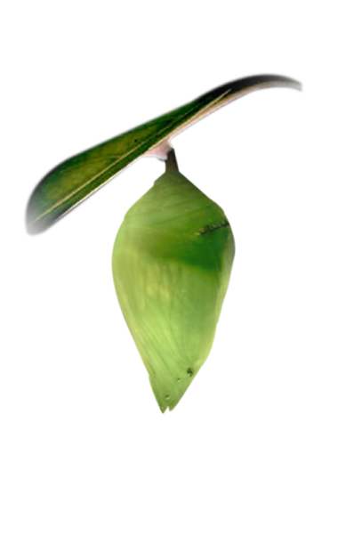Cocoon 1.png