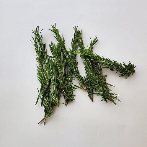 Herbs, Rosemary