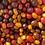 Thumbnail: Tomatoes, Cherry (medley) - Ontario