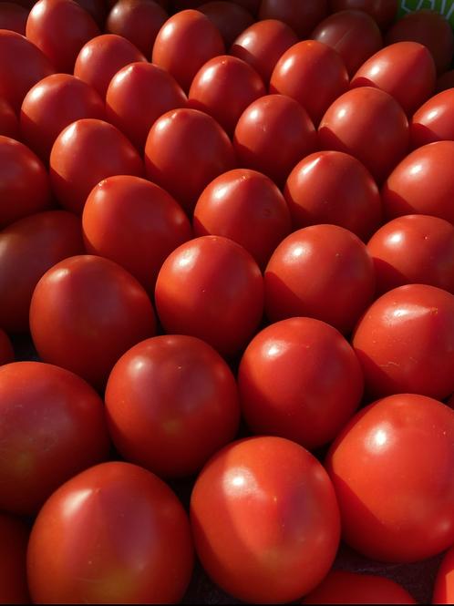 Tomatoes, Roma - Ontario