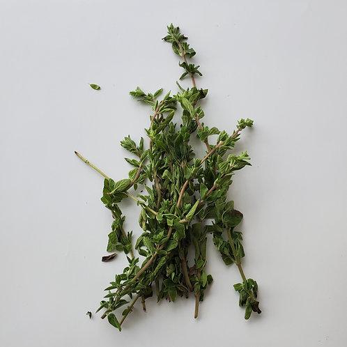 Herbs, Oregano
