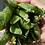 Thumbnail: Peas in shell