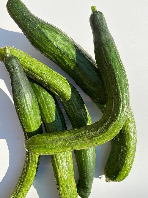 Cucumbers, English, Medium Curved - Ontario