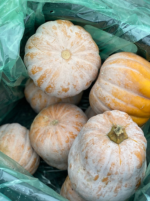 Squash, Koginut - Ontario super food