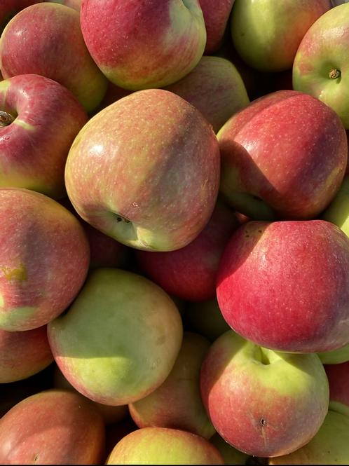 Apples, Honey Crisp - Ontario