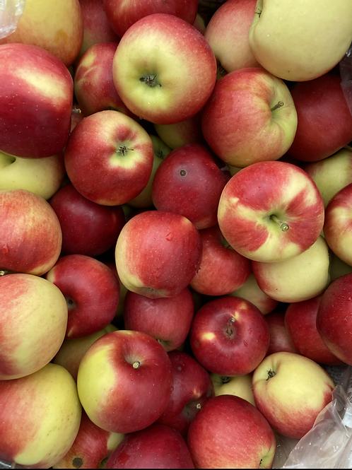 Apples, Ambrosia - Ontario