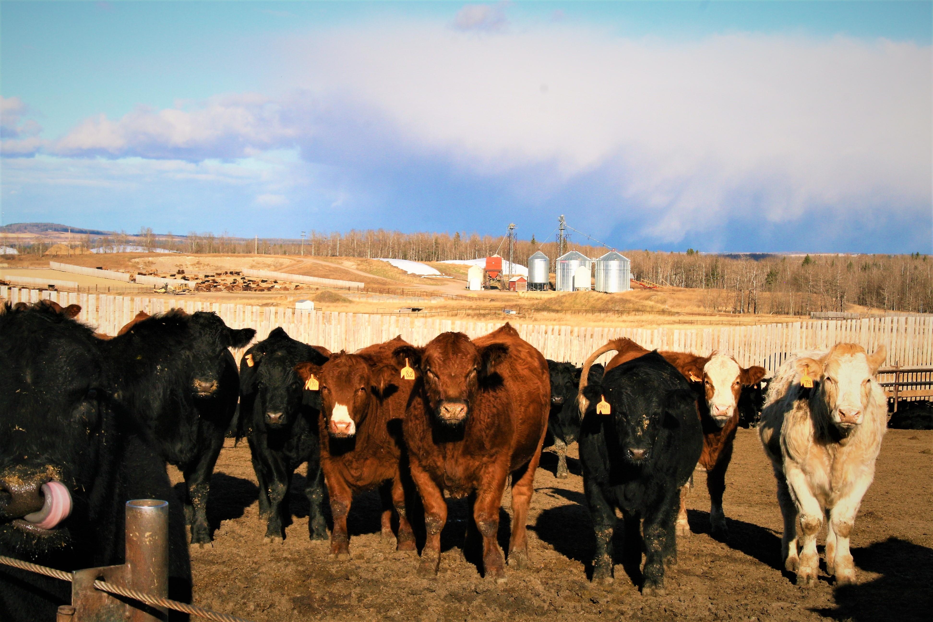 Website - Beef