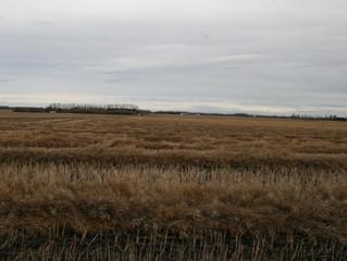 Prime Farmland in Central Alberta! - 149 Acres