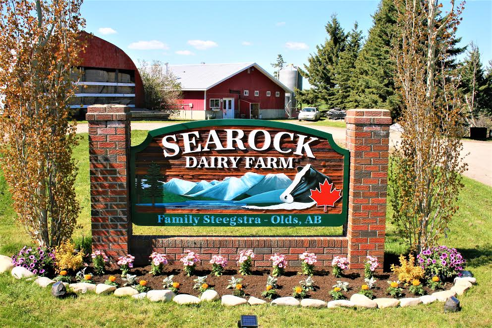 searock summer