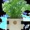 Thumbnail: Baby Sprout Gardening Kit