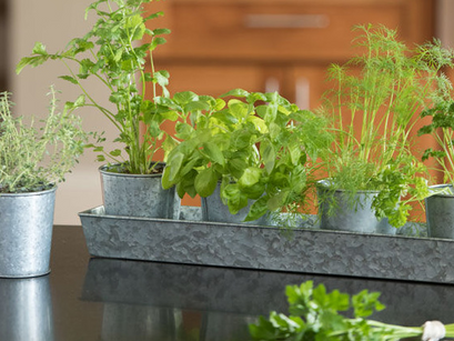 The Best Beginner herbs to grow