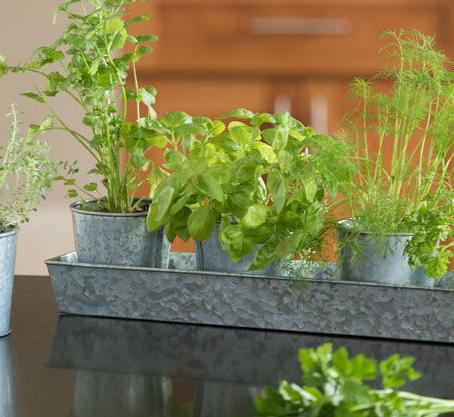 The Best Beginner herbs to grow