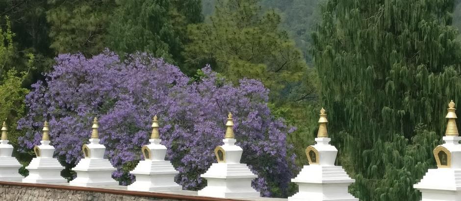 Bhutan: An alternate Utopia