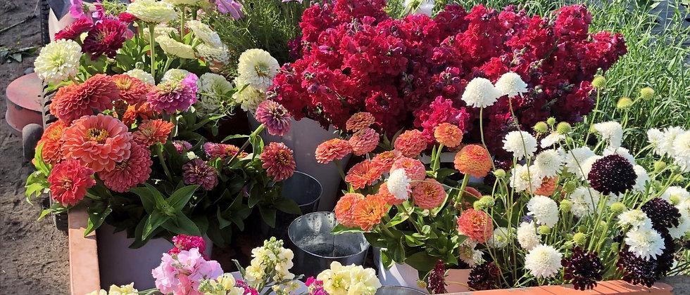 20 Week Full Season Bouquet Subscription