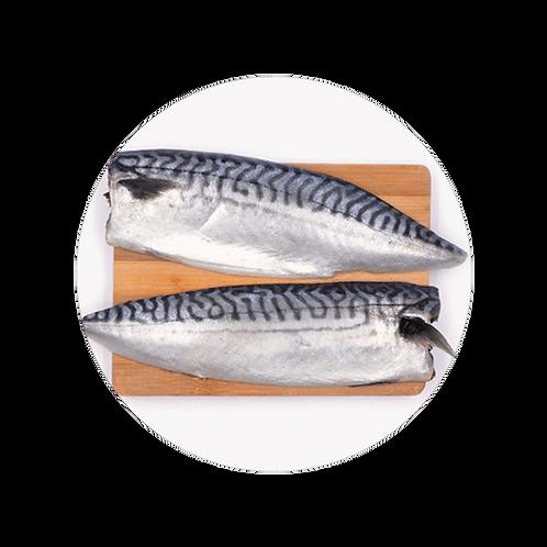 Fresh Boston Mackerel