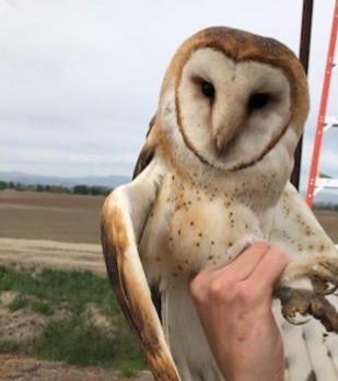 Owl%20image%203_edited.jpg
