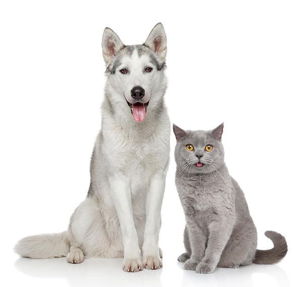 hund og katt, dyrlege, veterinær, Lom, Gudbrandsdalen, Logre