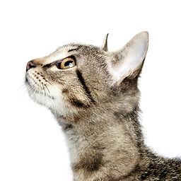 Katt, dyrlege gudbrandsdalen