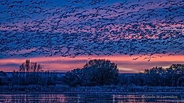 Fly in at Dawn.jpg